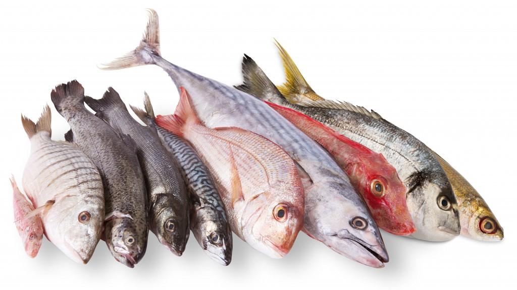 Pescados y mariscos a precios accesibles