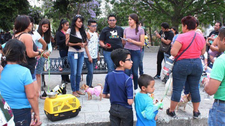 Gobierno capitalino comparte con la ciudadanía acciones para evitar el maltrato animal